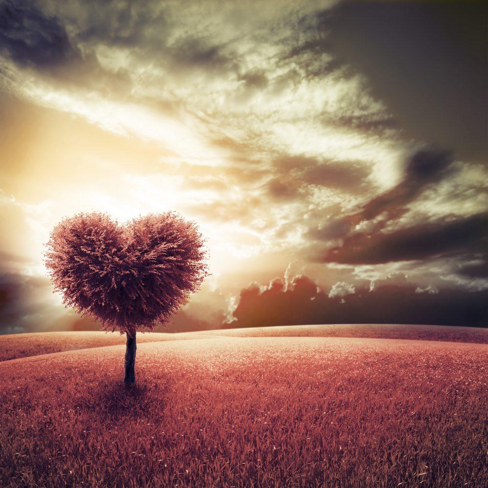 Cómo saber si es apego o amor, no es a mí a quien amas, sino a la fantasía que has hecho de nosotros