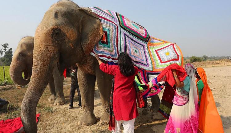 Vestimenta de elefantes