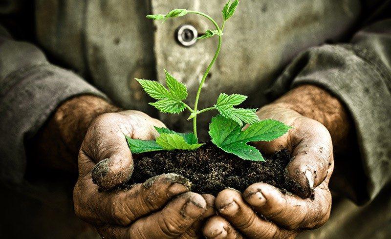Cómo llevar una vida saludable y contribuir con la conservación del medio ambiente, conservación del medio ambiente y vida saludable en sólo 7 pasos