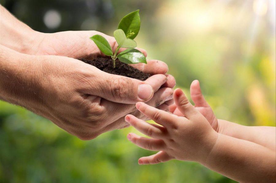 salud ecológica