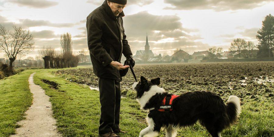 Los perros lazarillos son las mejores guías para personas invidentes