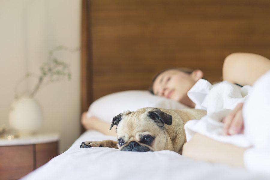 Día internacional del sueño: ¿por qué es importante dormir bien?
